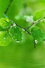 Green background, water drops on the leaves iPhone Wallpaper