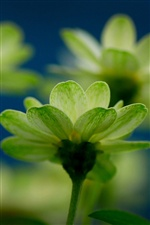 Green flowers macro iPhone wallpaper