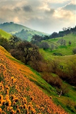 Green hills and orange flowers iPhone wallpaper