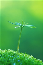Green shoots in spring iPhone wallpaper