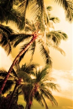 Hawaii summer palm trees iPhone wallpaper