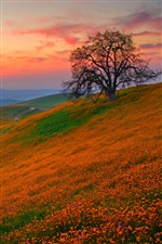 Hill covered with wild flowers iPhone Wallpaper