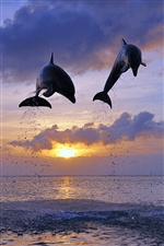 Honduras, sea, sunset, bottlenose dolphins jumping iPhone wallpaper