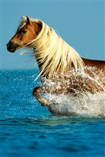 Horse running water iPhone wallpaper