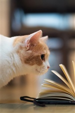 Humorous pictures, cat reading book iPhone wallpaper