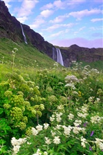 Iceland morning scenery, waterfalls, grass, flowers iPhone Wallpaper