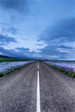 Iceland, road, flowers, horizon, blue sky iPhone wallpaper