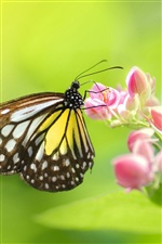Insect butterfly flowers iPhone wallpaper