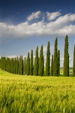 Italy, Campania, spring scenery, fields, trees iPhone wallpaper