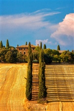 Italy, Siena, Tuscany, trees, fields, house iPhone wallpaper