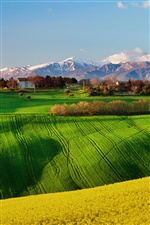 Italy nature scenery, fields, spring, rapeseed, sky iPhone wallpaper