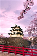 Japan Hirosaki Castle, pink cherry blossoms iPhone wallpaper