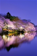 Japan, Osaka, night park, lake, lights, cherry flowers iPhone wallpaper