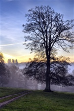 Trees dawn mist iPhone wallpaper