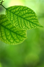 Two pieces green leaves iPhone Wallpaper