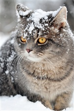 Wild cat in the snow, snowflakes iPhone wallpaper