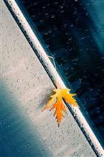 Autumn yellow leaf, rain, water drops iPhone wallpaper