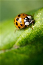 Insect green leaf ladybird iPhone wallpaper