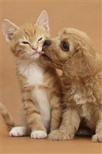 Kitten with puppy's friendship iPhone wallpaper