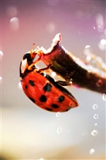 Ladybug macro photography iPhone wallpaper