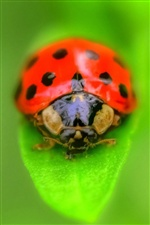 Ladybug on green leaf iPhone wallpaper