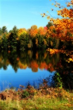 Lake and trees of the beautiful fall iPhone wallpaper