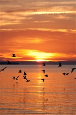 Latvian landscapes, fly birds, lake, sunset iPhone wallpaper