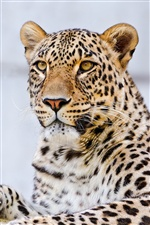 Leopard macro photography iPhone wallpaper