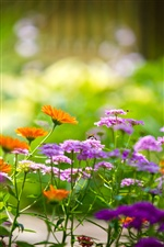 Macro photography of flowers in the garden iPhone Wallpaper