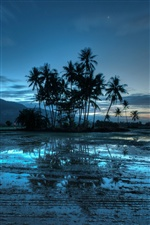 Malaysia evening landscape, palm trees, blue style iPhone wallpaper