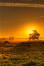 Nature morning, sunrise, German landscape iPhone wallpaper