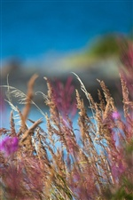 Flowers grass macro blur photography iPhone wallpaper