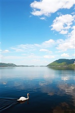 Lake scenery, clouds, a swan in water iPhone wallpaper