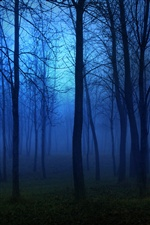 Morning forest, fog, trees, blue iPhone wallpaper