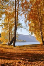 Nature autumn scenery, yellow leaves, trees, lake iPhone Wallpaper