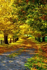 Nature autumn, yellow leaves, trees, road, fence iPhone wallpaper