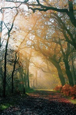 Nature forest, morning, autumn, road, light rays iPhone wallpaper