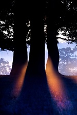 Nature forest trees, morning, sun rays iPhone Wallpaper