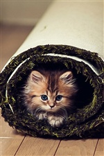 Naughty and cute little cat iPhone wallpaper