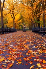 New York, autumn park, walk road, yellow leaves iPhone wallpaper