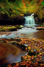 Northern England, Yorkshire, forest, waterfall, leaves, autumn iPhone wallpaper