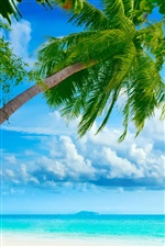Ocean, palm tree, paradise iPhone wallpaper