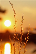 Sunset plants, light, blur background iPhone wallpaper