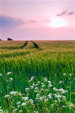 Nature scenery, grass, flowers, summer iPhone wallpaper