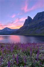 Norway nature scenery, lake, mountains, flowers, sunrise iPhone Wallpaper