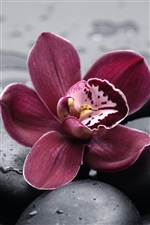 Orchid and pebbles close-up iPhone wallpaper
