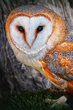Owl golden feathers iPhone Wallpaper
