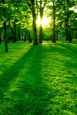 Park, morning sun, green trees and grass iPhone wallpaper