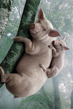 Pig and piggy climb the tree iPhone wallpaper