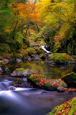 Nature, autumn forest, river, rocks, moss, leaves iPhone wallpaper